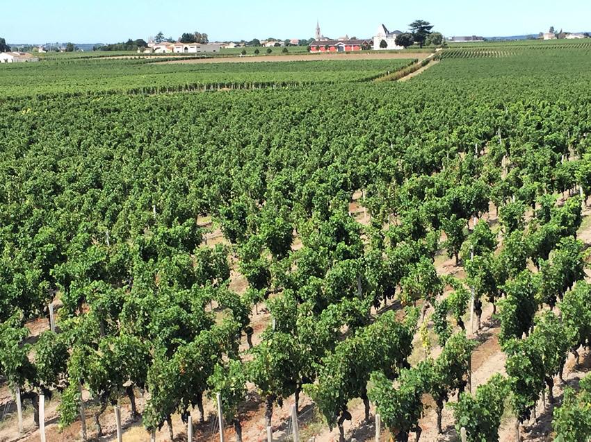 Saint-Emilion Vineyards from La Terrasse Rouge