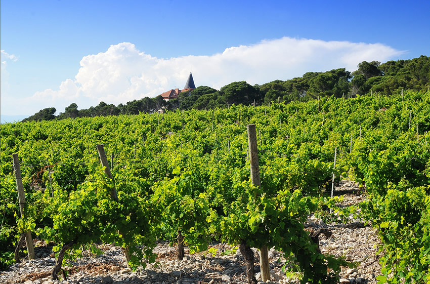 The Vineyards of Château Capitoul