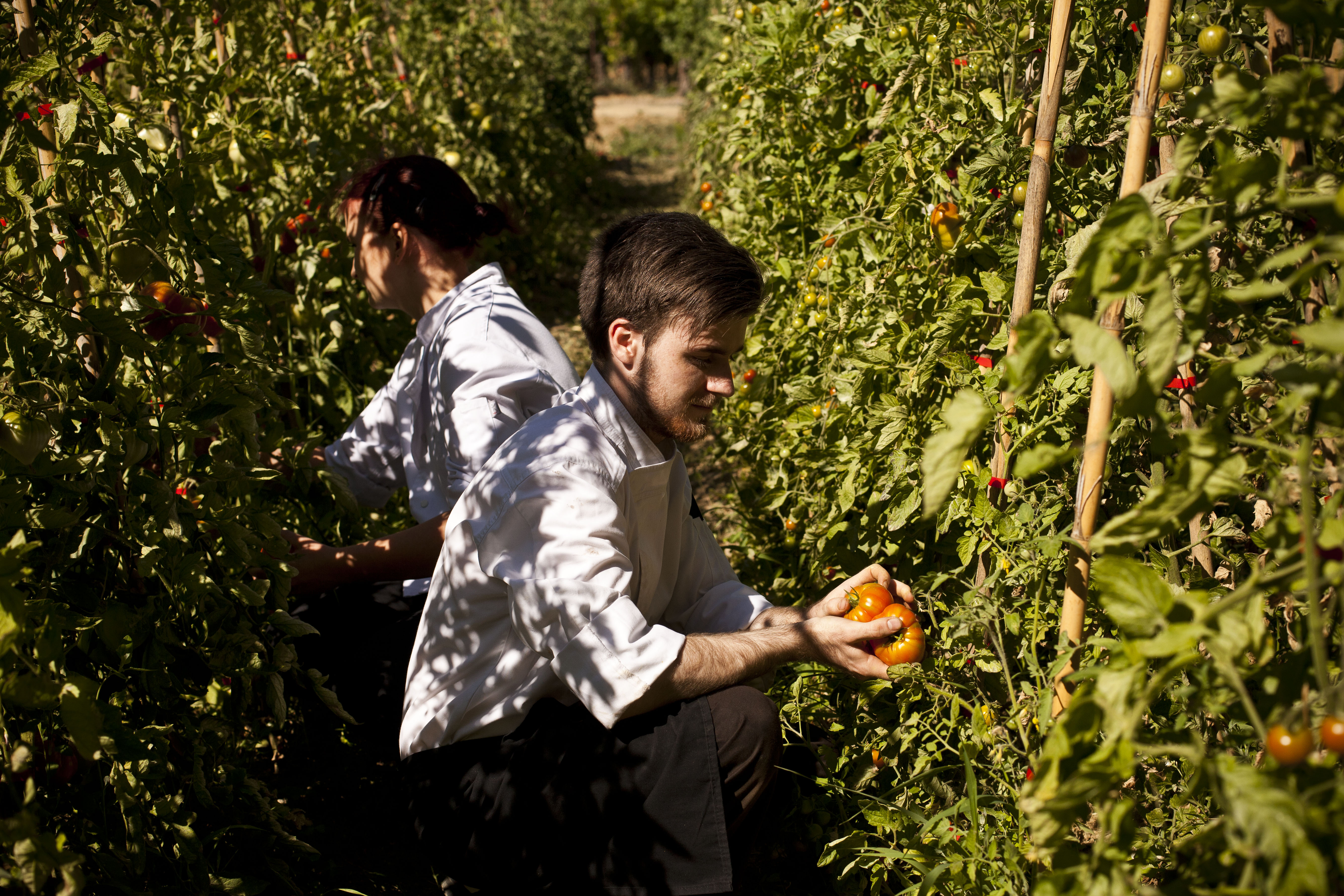 From Root To Leave, The Chefs Pick Their Vegetables From The Château's Garden